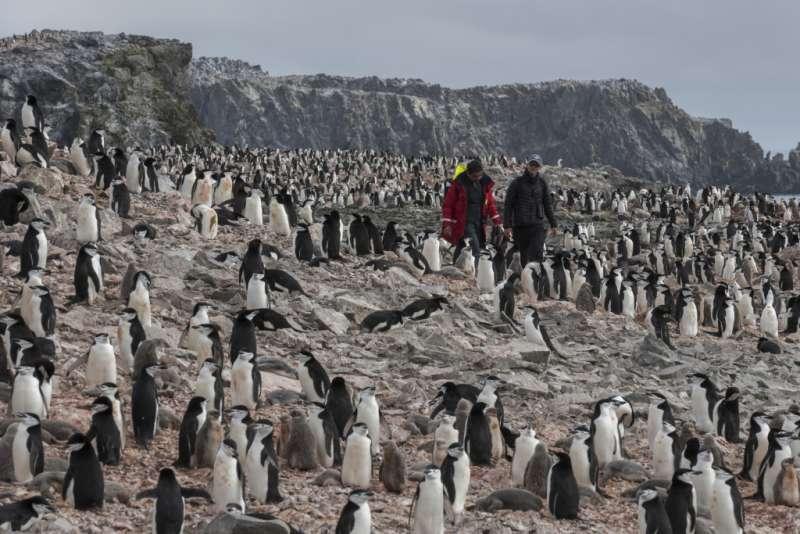 科學家使用無人機和手持計數器調查頰帶企鵝數量。(圖截自綠色和平官網)