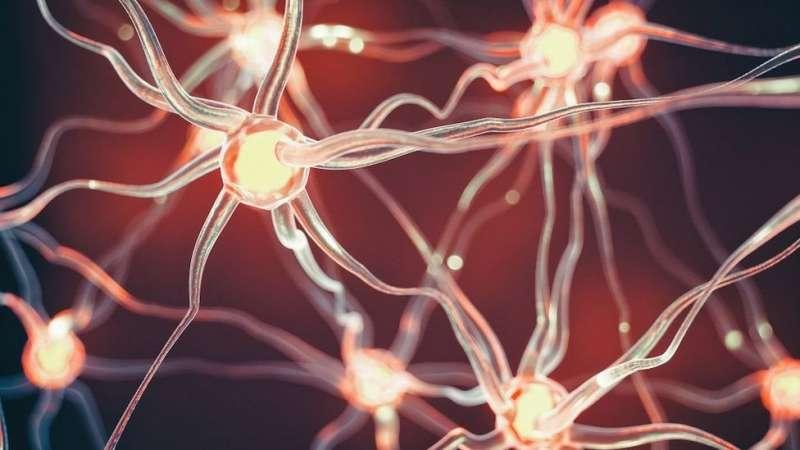 2大腦中的神經原。(圖/BBC News)