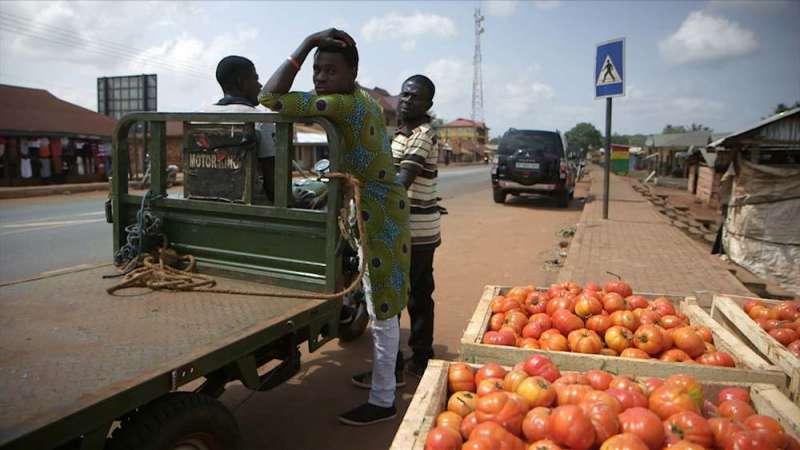 非洲工人與一旁採收好的番茄。(圖/公視)