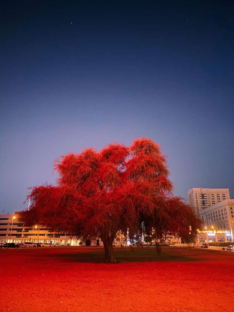 20200304樹木和地面的濃郁紅光令這張照片質感超凡脫俗。配合夜空,就像是科幻電影的宣傳照。(圖片取自:Apple/Mitsun-Soni攝)