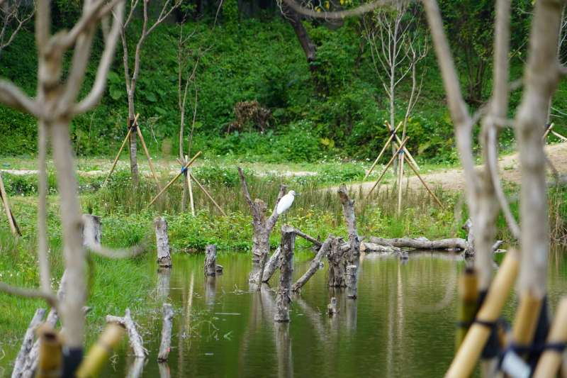永春陂濕地公園。(台北市政府提供).