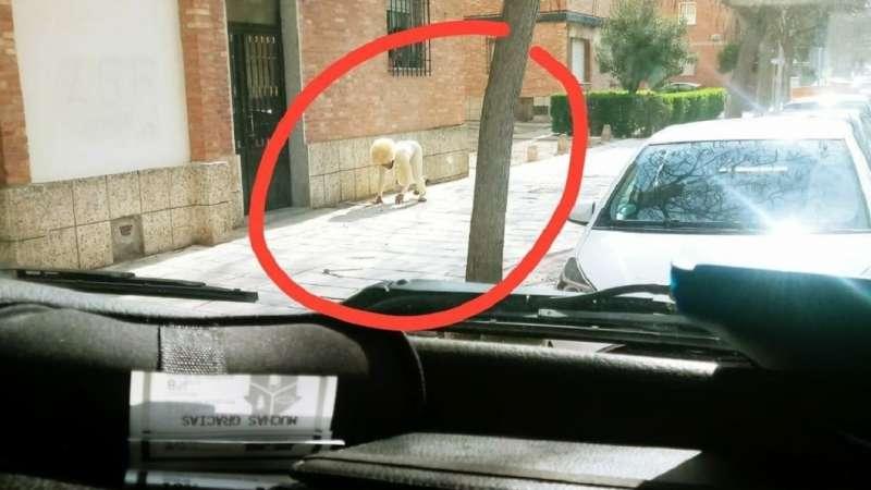 為了上街,不惜扮成狗的西班牙民眾。(圖/取自推特)
