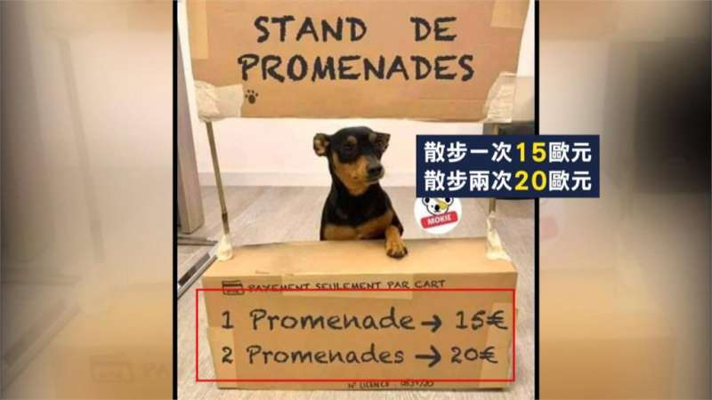 法國有人出租自家的狗狗供沒有養狗的民眾也能上街透透氣。(圖/取自網路)