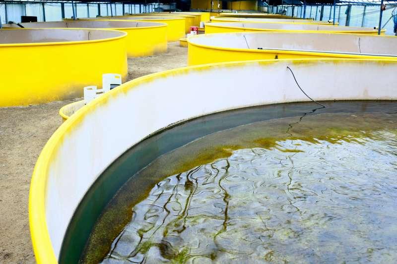 傳統室內循環水養殖前期需投入高額建置成本,讓一般漁民難以負擔。(圖/悠芙柏公司提供/Suriya srion@Shutterstock.com)