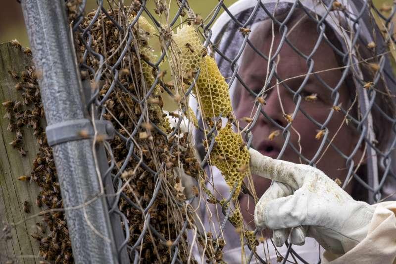 人類城市化、開發農業土地,佔據昆蟲的棲息地、食物來源,造成全球昆蟲數量浩劫性的驟減。(AP)