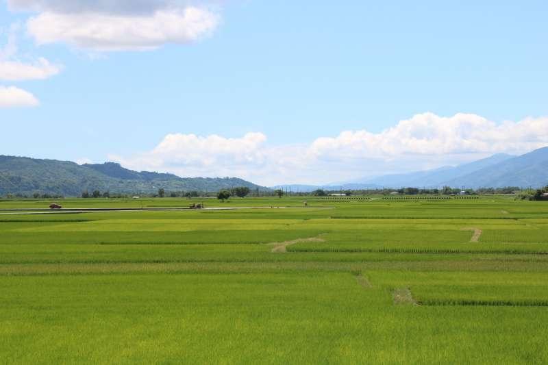 位於池上的大觀亭可以將稻田美景一覽無遺(攝影/賴韻琳)