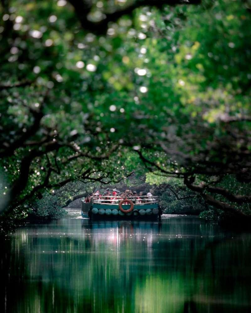 四草綠色隧道幽靜的氣氛和綠意盎然的紅樹林景觀。(IG@allenlo0809授權提供)