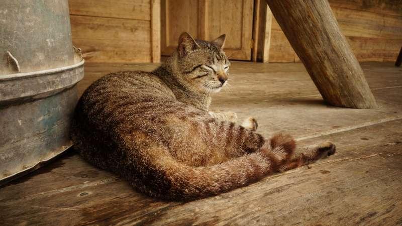 魯迅酷愛虐貓。(示意圖/pixabay)