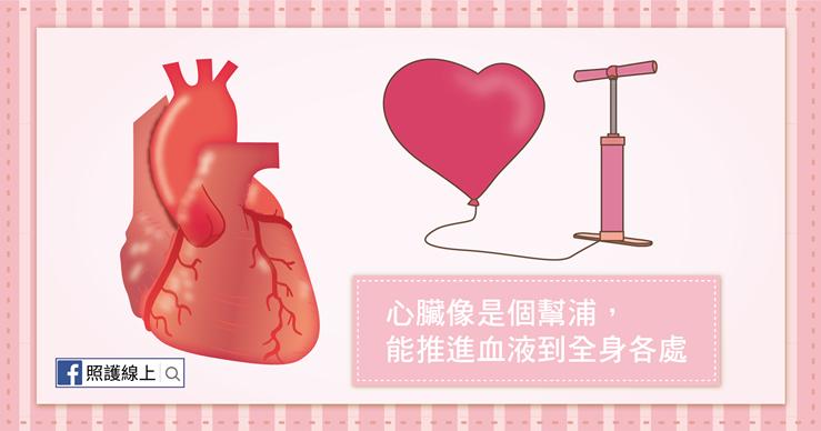 心臟衰竭-02。(圖/照護線上)