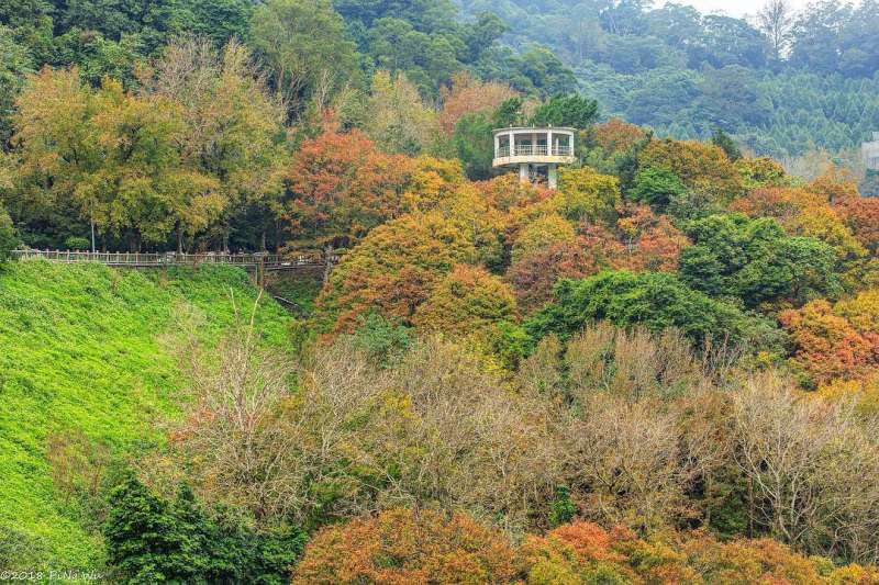 秋天時至石門水庫風景區內散步,可觀賞楓紅景色。(圖/IG@tw.plover319)