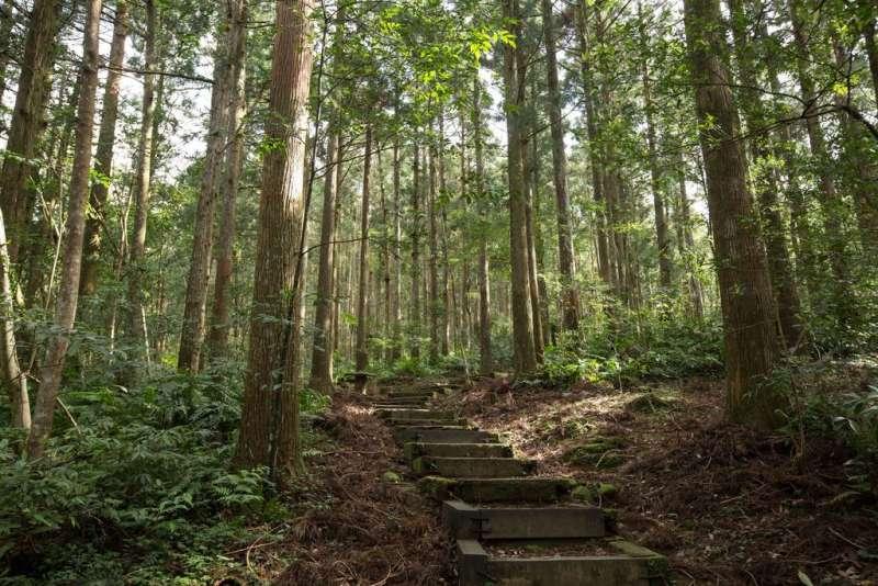 園區內的路線分為自導式步道、景觀步道、森林知性步道、東滿健行步道。(圖/取自桃園觀光導覽網)