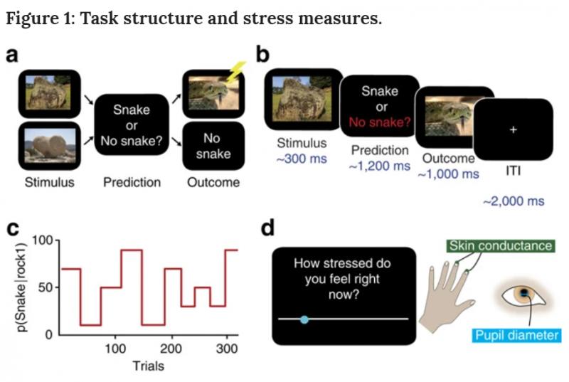 (圖:Computations of uncertainty mediate acute stress responses in humans。)