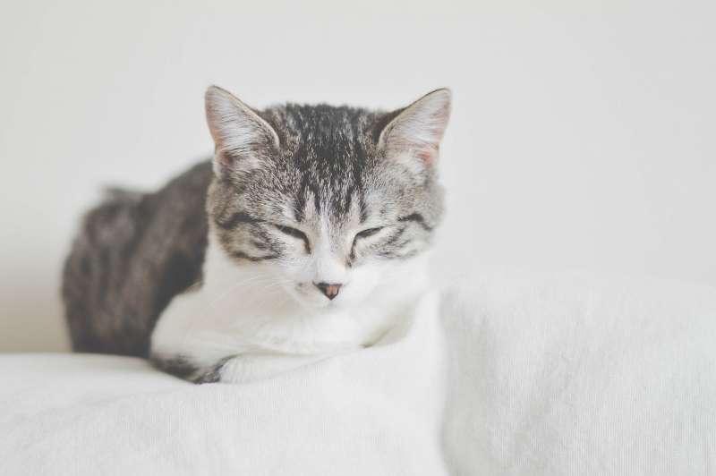 貓咪(取自Pixabay)