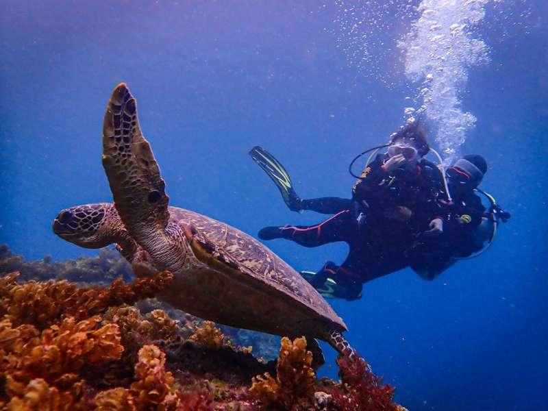在小琉球潛水不僅可以看到珊瑚礁、海底生物,還有可愛的綠蠵龜!(圖/IG@ eva.0722)