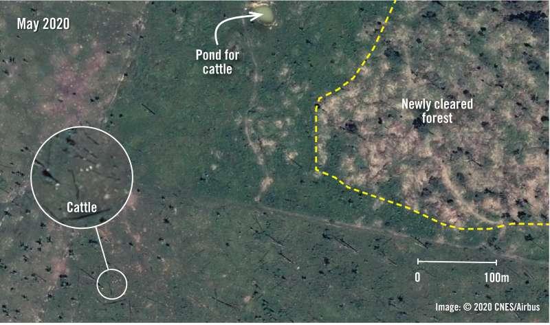 020年,傑西-帕拉納河保留區。衛星影像和地圖證據呈現了2019-2020年巴西朗多尼亞州亞馬遜雨林保護區的森林濫伐程度。© 2020 CNES, Airbus