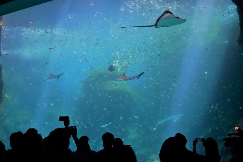 台灣首座X-park八景島水族館即將開幕。(記者林彥呈攝)