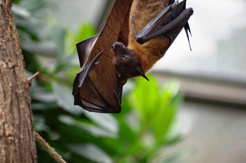 新冠病毒激起人們對「動物傳人疾病」的疑慮。(by dustinthewind@pixabay)