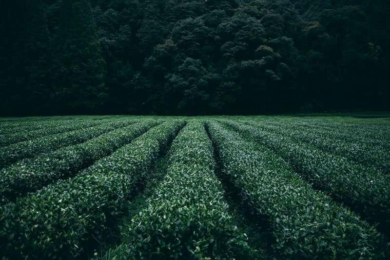 開發後農地。(by Free-Photos@pixabay)