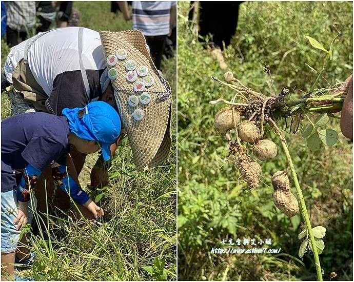農遊活動的最大好處,就是有專家隨身提供技術指導。(圖/桃園市政府提供)