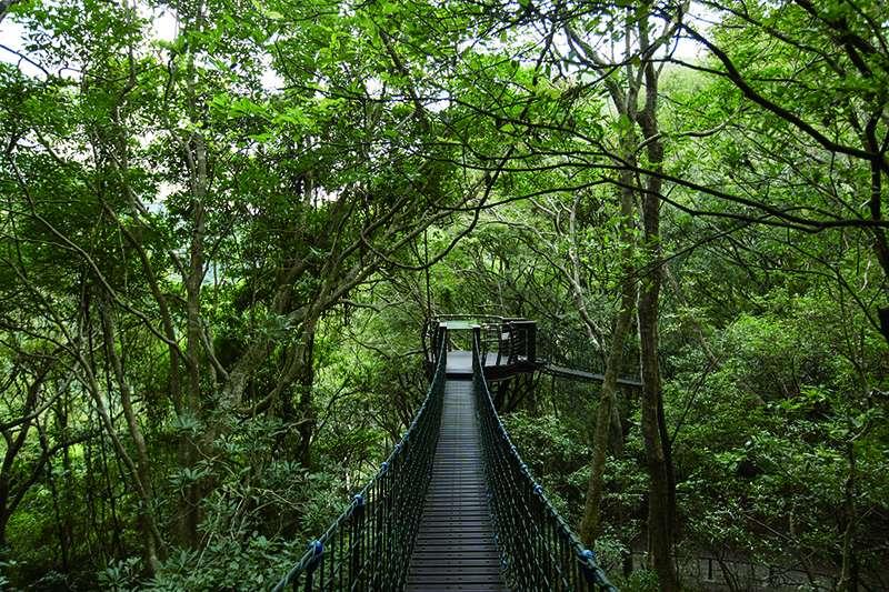 巴陵古道生態園區保留古道遺跡, 並循線在樹林間架設全長約1.28公里的棧道與繩橋。(圖/桃園市政府)