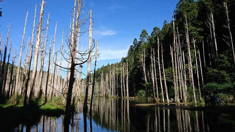 阿溪縱走路線景點-水漾森林。(圖/Tripbaa趣吧!達人帶路)