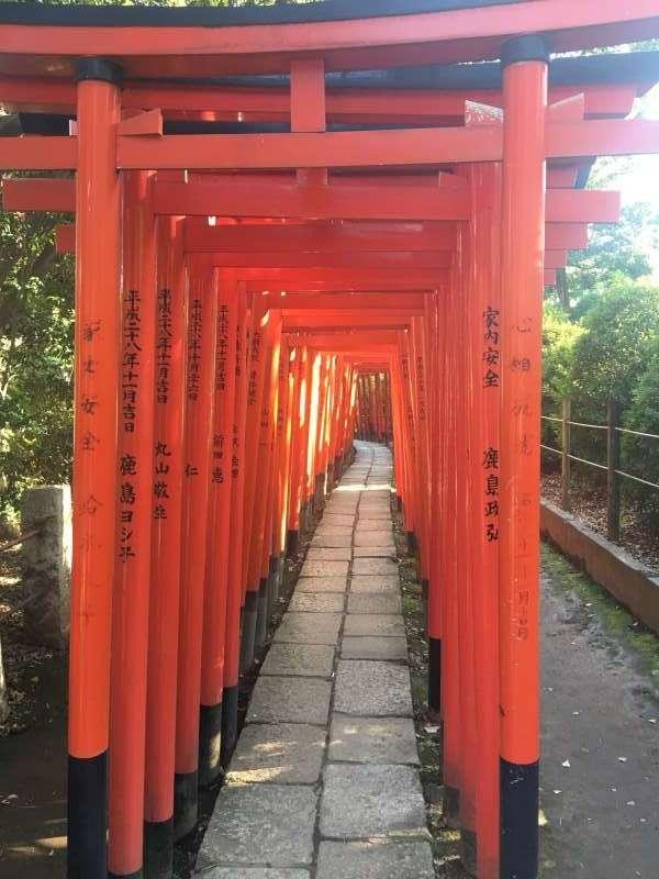 「千本鳥居」並非京都伏見稻荷大社的專利,日本其他各地的神社也有機會能看到,圖為東京的根津神社。(圖/陳毅龍攝)