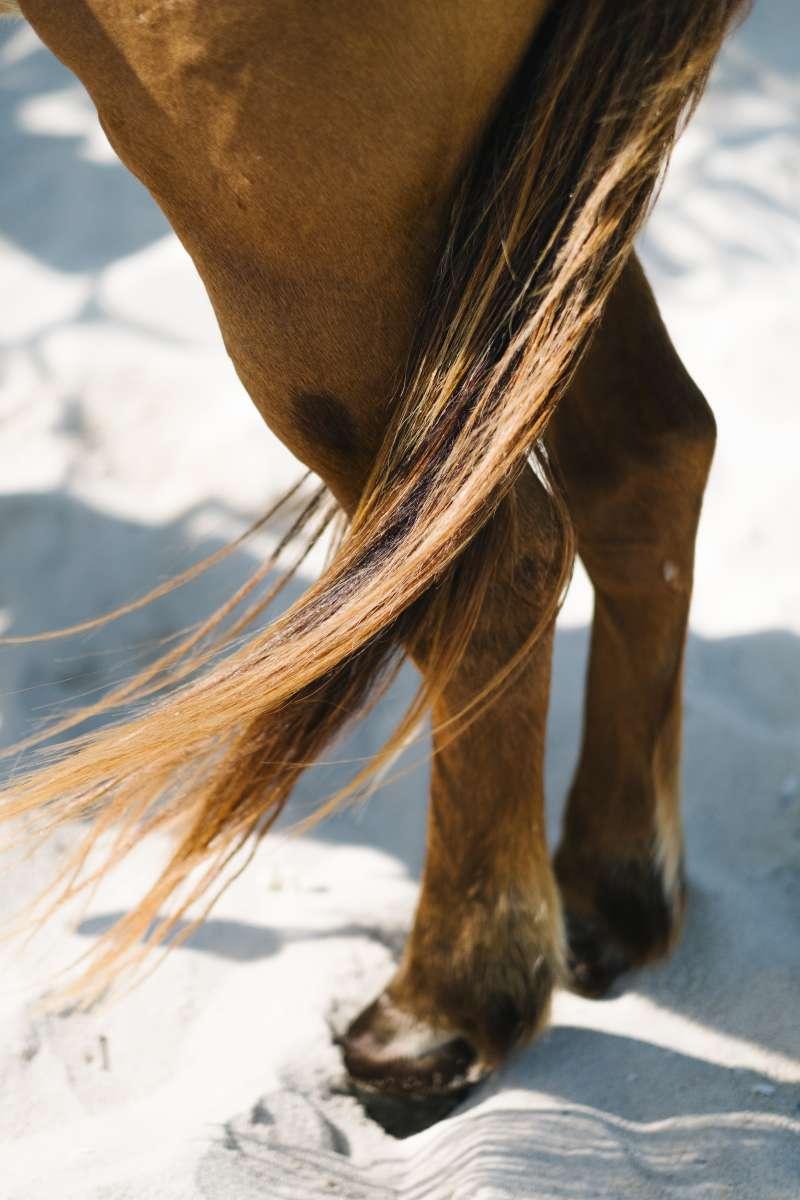圖二、馬尾毛有良好的透氣性,能夠調節溫度,是高級名床常見的材料。(圖/Freepik)