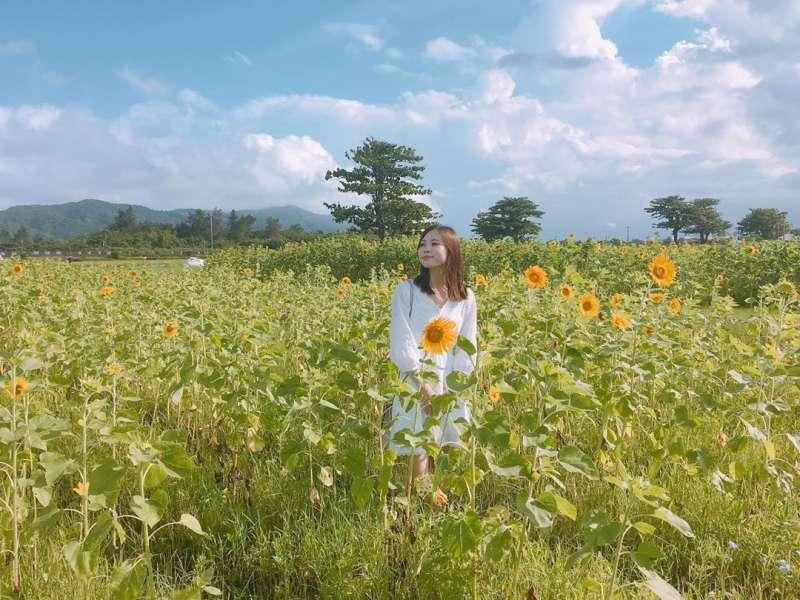 向日葵花海景點推薦-台開心農場。 (圖/hsuan_indef, Instagram)