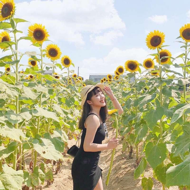 向日葵花海景點推薦-向陽農場。 (圖/_chia.uu_, Instagram)
