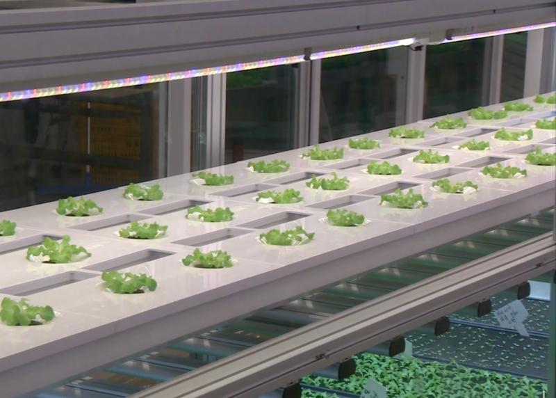 Metro Farm每天約可產出30~40公斤的蔬菜,效率相較傳統農業高出40倍!(圖/食力foodNEXT提供)