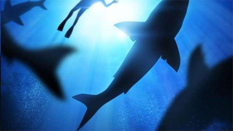 鯊魚本身的行為模式也讓科學家難以捉摸。(圖/取自BBC)