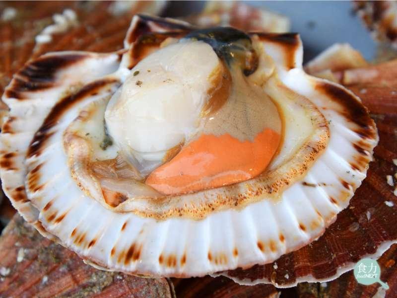 海扇貝其閉殼肌通常只有一個,其肌肉構造也較為肥厚強壯。(圖/食力提供)