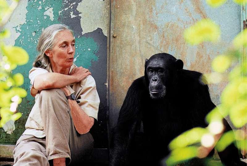 當今最重要的靈長類動物學家之一珍古德博士榮獲唐獎永續發展獎 (照片由 Michael Neugebauer提供)