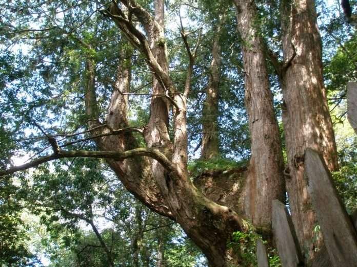 新竹景點推薦-鎮西堡神木群。(圖/Tripbaa趣吧!亞洲自由行專家)