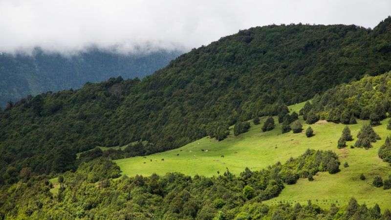 薩克騰野生動物保護區生態系統豐富,有稀有物種棲身。(BBC News中文)