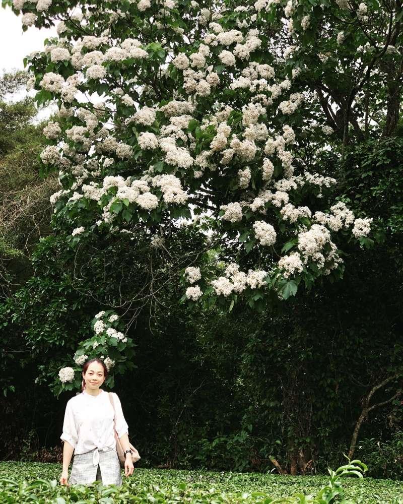 銅鑼必去景點推薦-九華山油桐花。 (圖/yanjhen, Instagram)