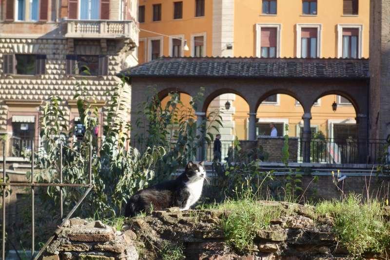 古羅馬遺跡銀塔廣場的貓咪。(Sonse@flickr)
