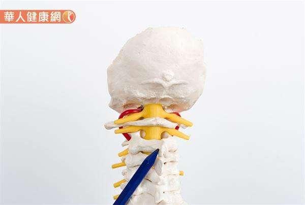 頸椎中擁有身體最大副交感神經「迷走神經(vagus nerve)」的存在。故姿勢不良引起的脊椎錯位、駝背等頸椎異常問題,更是誘發自律神經失調的關鍵因素之一。(圖/華人健康網)