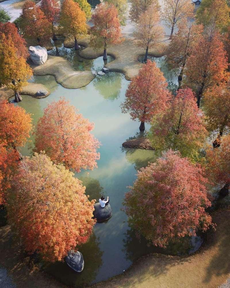 冬季時落羽松會轉紅,景色將更為夢幻。(圖/chun_vision@instagram提供)