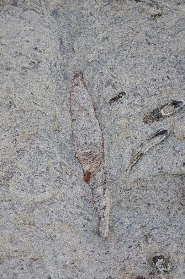 在台灣北海岸發現史前巨蟲化石洞穴,其頂部形成一個羽毛狀的塌陷結構。(截自台大地質科學系網站)