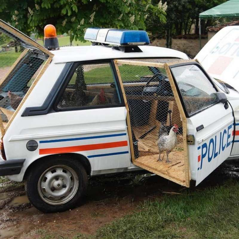 改造成雞舍的報廢警車(圖/Benedetto Bufalino)
