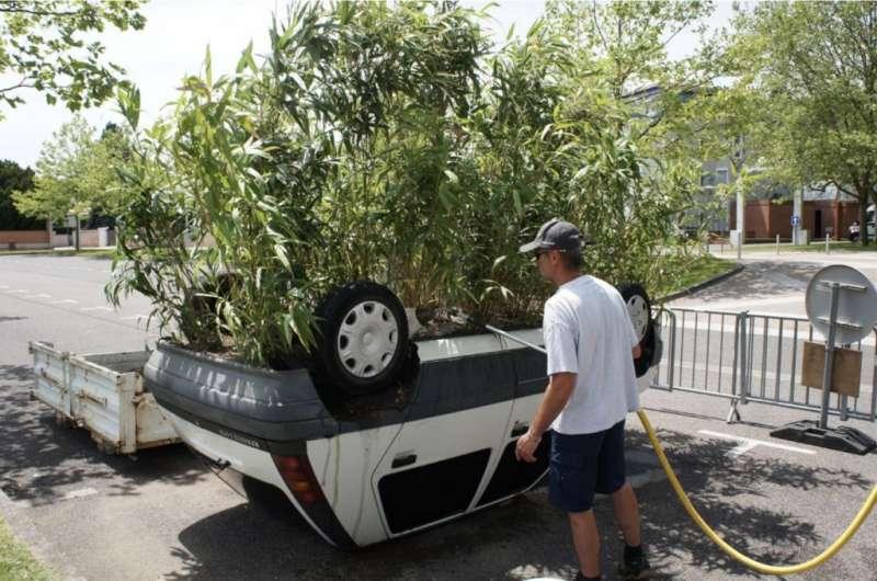 廢棄車改造的盆栽(圖/Benedetto Bufalino)