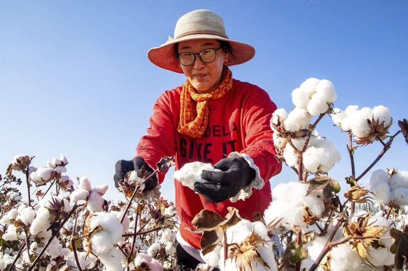 新疆棉花,維吾爾人,種族滅絕(AP)