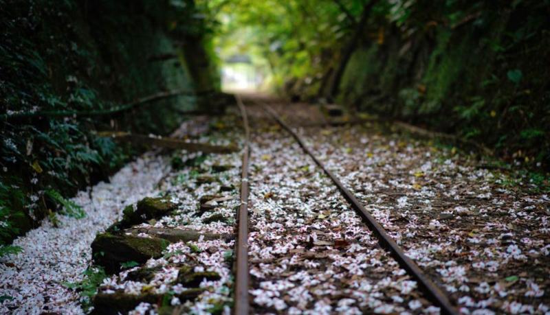 油桐花景點推薦-新平溪煤礦博物園區。 (圖/davidtai5226,Instagram)