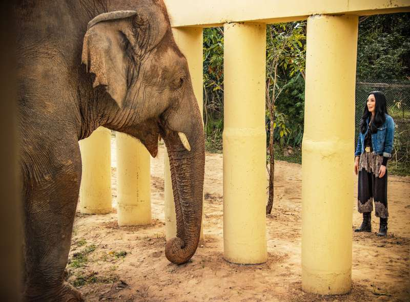 斯里蘭卡政府1985年將大象卡萬送給巴基斯坦前獨裁者,牠卻過得極為悲慘,2020年12月被巨星雪兒與動保組織救出。(AP)