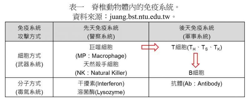 脊椎動物體內的免疫系統 (圖/曲博科技教室)