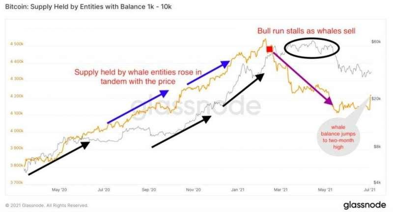 鯨魚大戶比特幣持倉表 黃:持倉量;灰:比特幣價格(圖:glassnode)