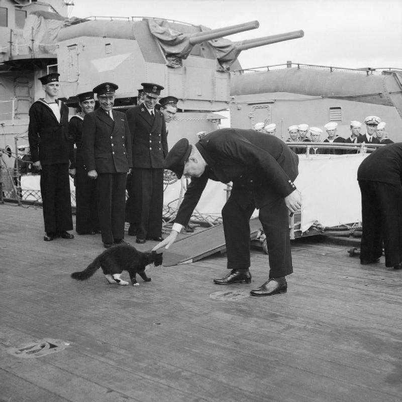 英國首相邱吉爾曾彎腰摸摸一隻船上的「貓艦員」。(圖/維基百科)