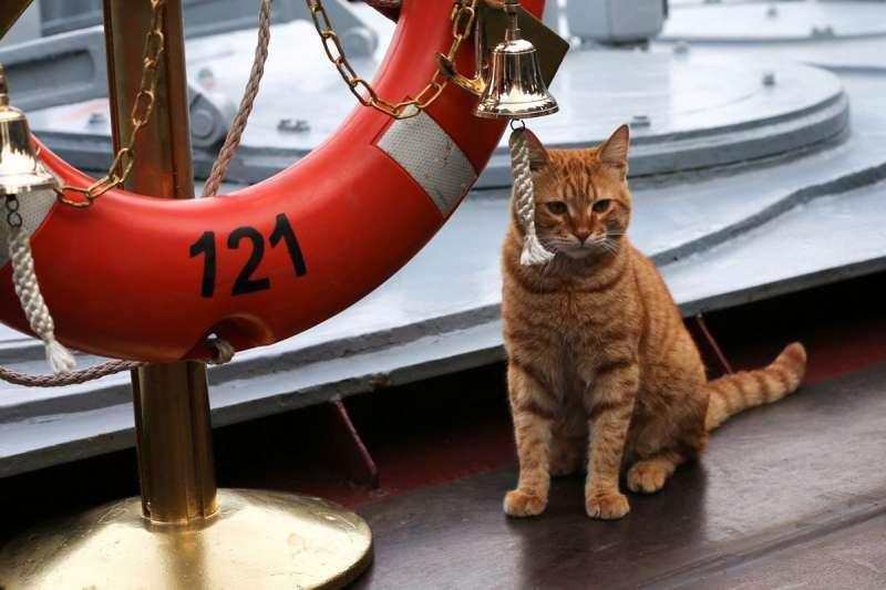 2017年,這隻薑黃色小貓咪將隨著俄羅斯海軍遠征敘利亞海岸。 (圖/俄羅斯國防部Twitter)