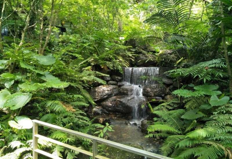 坐擁台灣唯一僅存低海拔原生亞熱帶雨林(圖/HotelsCombined提供)